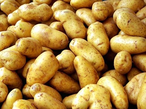 Україна вперше імпортує картоплю з Узбекистану фото, ілюстрація