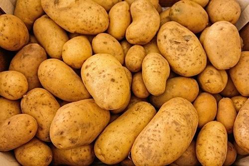 В Європі посадили рекордну кількість картоплі фото, ілюстрація