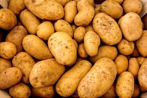 Фермери садять менше картоплі, але її буде вдосталь фото, ілюстрація