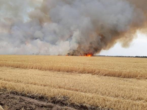 На Херсонщине искра от пригородного поезда сожгла поле пшеницы фото, иллюстрация