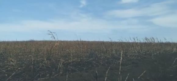 На Сумщині горять кукурудзяні поля фото, ілюстрація