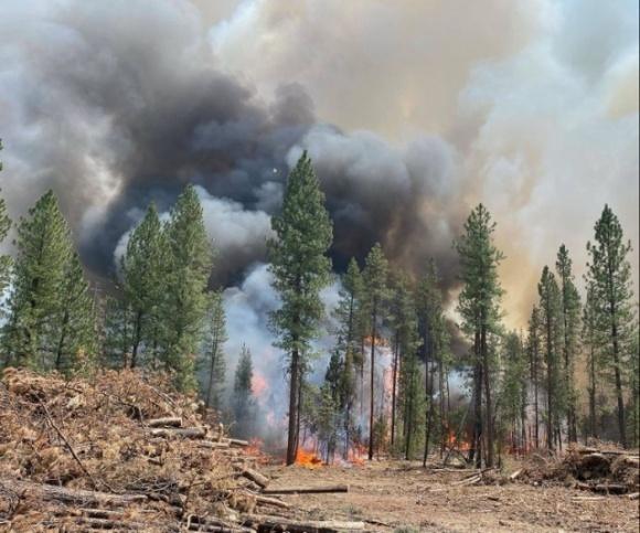 В США бушуют масштабные пожары. Огонь уже уничтожил 485 тысяч гектаров леса фото, иллюстрация