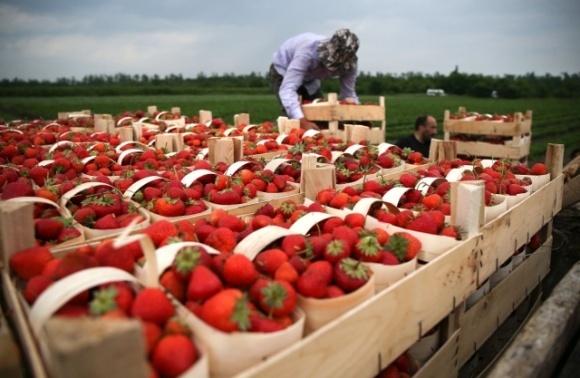 У Польщі катастрофічно бракує сезонних працівників з України фото, ілюстрація
