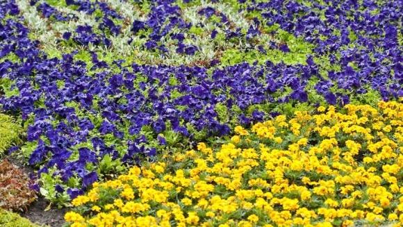 Найбільший прапор з квітів з висоти (ВІДЕО) фото, ілюстрація