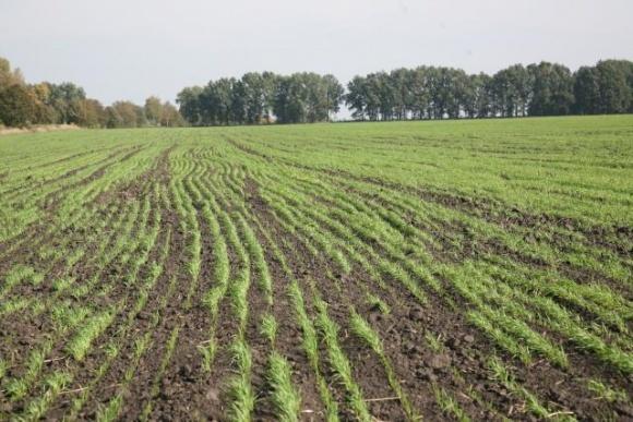 Рассчет нормы высева пшеницы озимой фото, иллюстрация