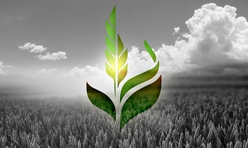 Аграрний фонд звернувся до влади з проханням відреагувати на тиск з боку НАБУ фото, ілюстрація