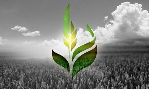 Аграрный фонд обратился к властям с просьбой отреагировать на давление со стороны НАБУ фото, иллюстрация