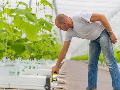 В Голландии создана онлайн-программа учета работ и процесса выращивания для небольших хозяйств фото, иллюстрация