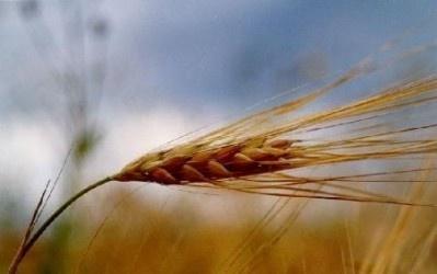 У 2018 році обсяги сільськогосподарського виробництва збільшаться на 5,1% – Інститут аграрної економіки фото, ілюстрація