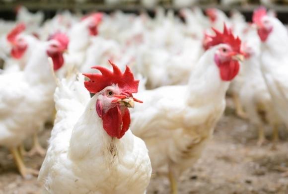 «Мироновский хлебопродукт» может занять место «Агромарса» фото, иллюстрация