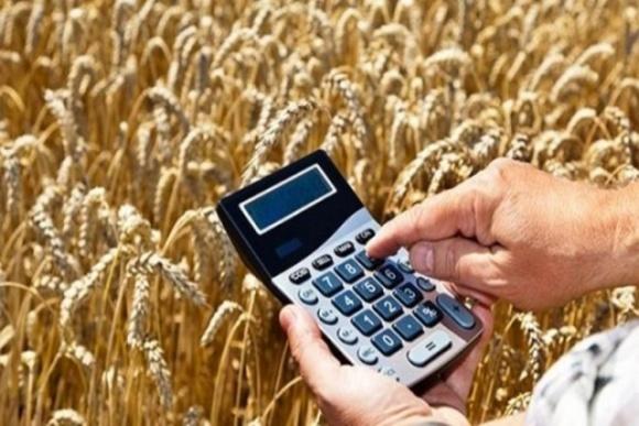 Минэкономики прогнозирует урожай зерновых в Украине в 2020 году на уровне 65-70 млн тонн фото, иллюстрация