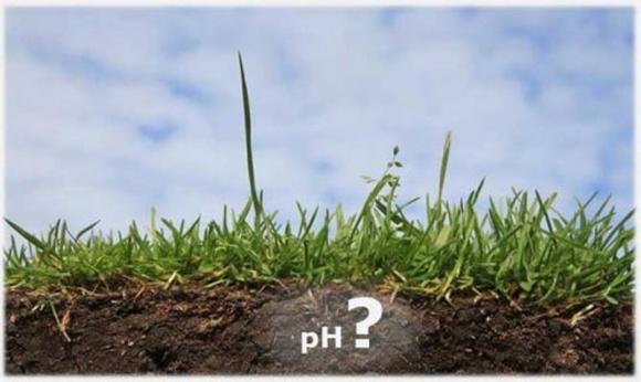 Агролайфхак: как при помощи доломита понизить кислотность почвы фото, иллюстрация