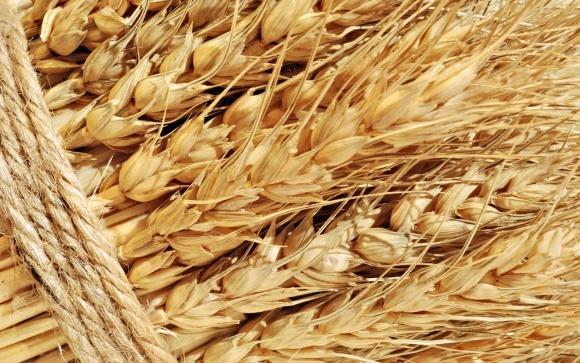 ЕС, Канада, Бразилия и Россия увеличат экспорт пшеницы, Украина - сократит фото, иллюстрация