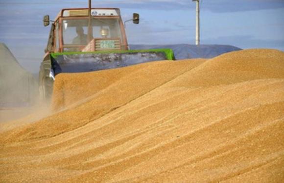 Основным рынком сбыта украинской пшеницы стала Индонезия фото, иллюстрация