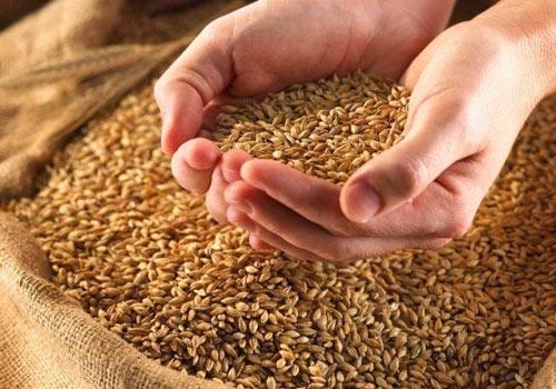 Украина - вторая в мире по урожайности пшеницы в 2015/16 МГ фото, иллюстрация