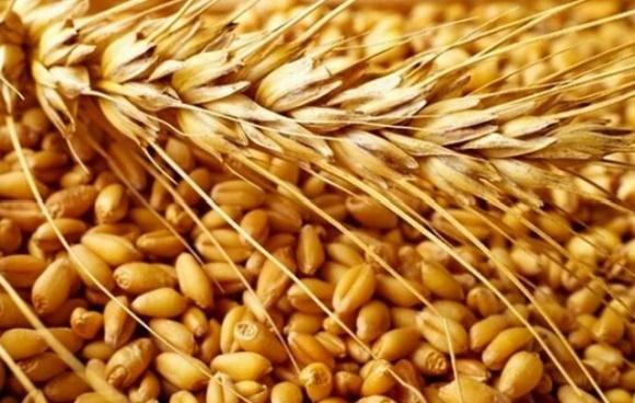 Посуха і вплив пандемії. Україна в 2020 році не дорахується від 5 до 10 млн т врожаю зернових фото, ілюстрація