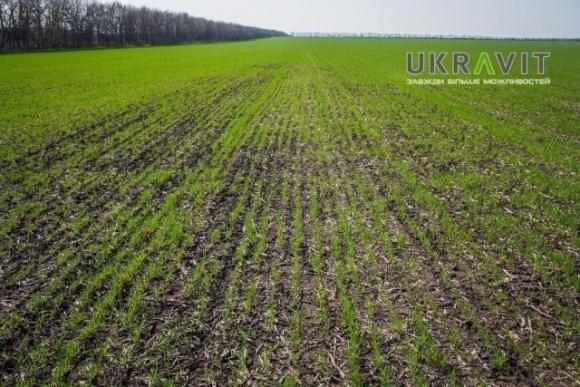 Протруювання насіння – обов'язковий елемент системи захисту у сезоні – 2020 фото, ілюстрація