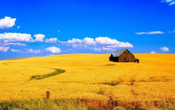 Агролайфхак: 7 советов академика Моргуна о том, как выбрать сорт пшеницы фото, иллюстрация