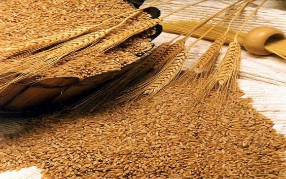 Пшеница из Украины и России вытесняет Австралию с азиатского рынка фото, иллюстрация