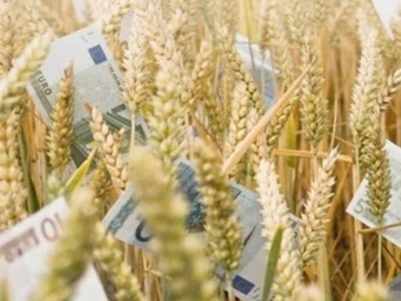 Погодні чинники продовжують опускати ціни на пшеницю фото, ілюстрація