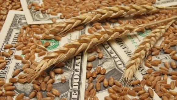Ціни на пшеницю залежать від погоди в країнах-виробниках фото, ілюстрація