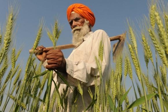 Індія увійшла в трійку провідних покупців української пшениці фото, ілюстрація