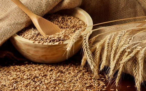 Основная проблема украинского зерна — невысокий спрос, — ГПЗКУ фото, иллюстрация