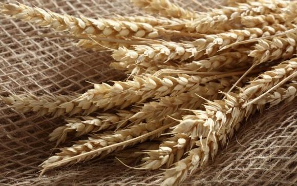 Подорожчання хліба назріло: зерно в Криму додає в ціні на тлі постачань до Сирії фото, ілюстрація