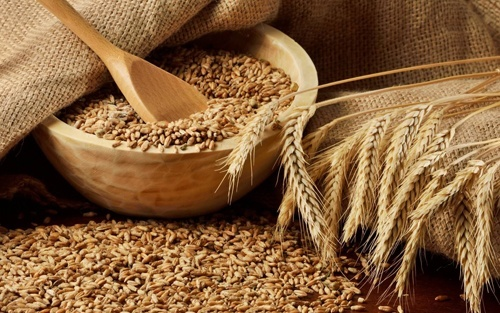 В 2018/19 МГ производство причерноморской пшеницы может составить 17% от мирового объема фото, иллюстрация