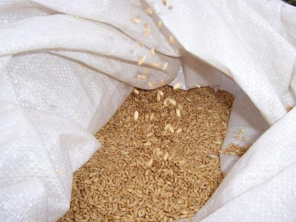 Трейдери відмовилися продавати пшеницю до Єгипту фото, ілюстрація