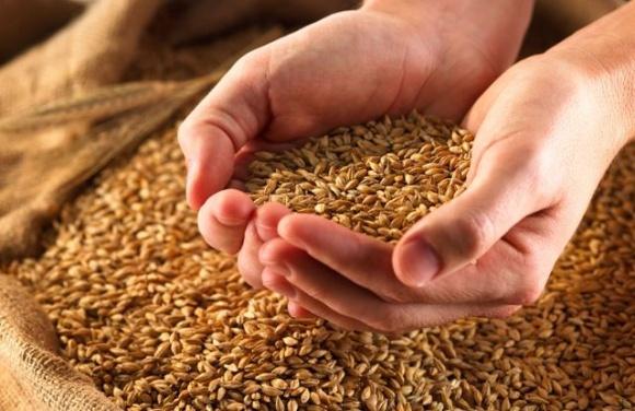Якість продовольчої пшениці в Україні в ц.р. в цілому є хорошою, — експерт фото, ілюстрація
