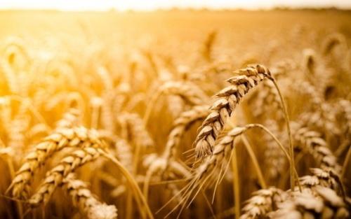 Мировое сообщество засвидетельствовало поддержку УЗА в отмене требования Индонезии по «прожарке» пшеницы фото, иллюстрация