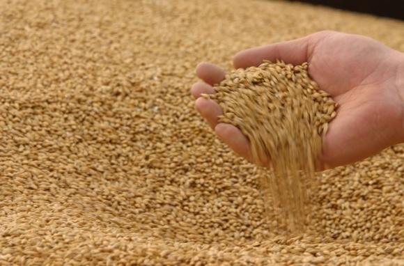 Філії ДПЗКУ прийняли понад 1,5 млн тонн зернових фото, ілюстрація