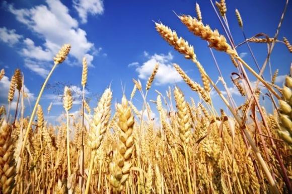 В Великобритании собрали худший урожай за последние десятилетия фото, иллюстрация