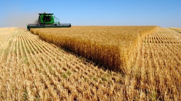 Урожайность сельхозкультур в ближайшие 10 лет вырастет фото, иллюстрация