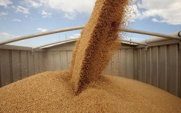 Темпы экспорта зерна снижаются. 80% урожая распродано фото, иллюстрация