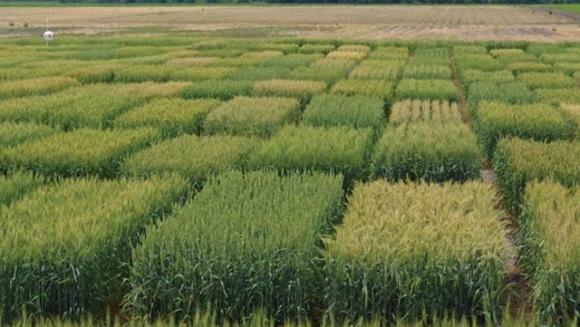 Аналіз супутникових знімків свідчить, що загибель посівів від посухи в Україні значно відрізняється від офіційних даних фото, ілюстрація