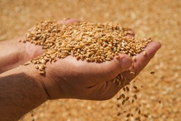 Україна увійде до топ-5 світових експортерів зерна, — прогноз фото, ілюстрація