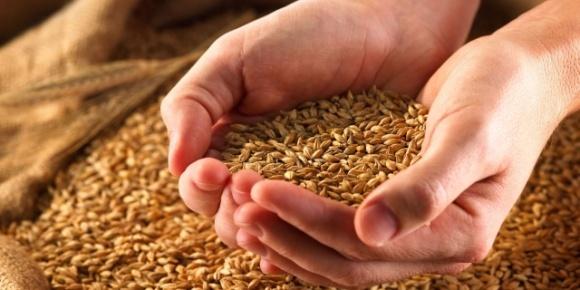 Крупнейшие импортеры украинской пшеницы в 2019/20 МГ практически вдвое увеличили закупки фото, иллюстрация