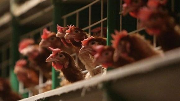 Молдова ввела запрет на ввоз мяса птицы и яиц из Украины фото, иллюстрация