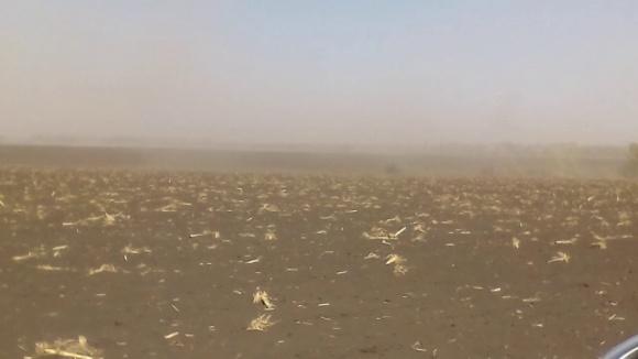Ураганні вітри майже повністю висушили верхній шар ґрунту фото, ілюстрація