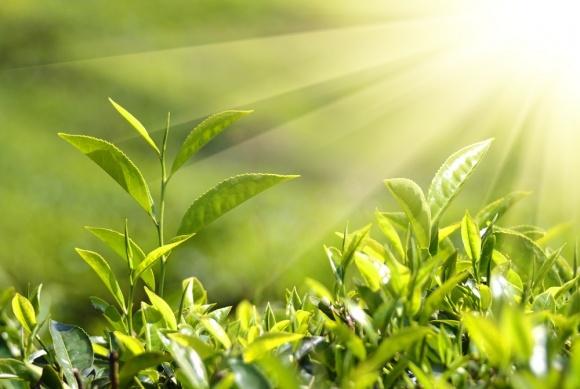 Вчені відкрили новий спосіб підвищення стійкості рослин фото, ілюстрація