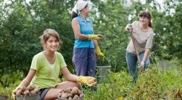 Ассоциация фермеров хочет облегчить найм сезонных работников фото, иллюстрация