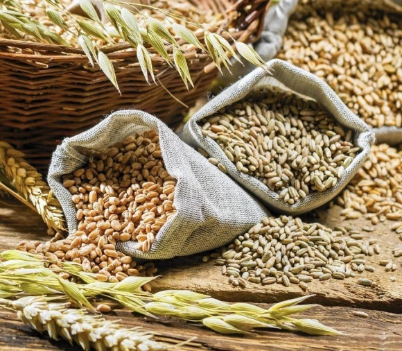 ДПЗКУ розпочала закупівлю зернових нового врожаю фото, ілюстрація
