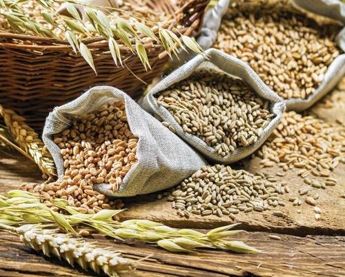 Экспорт зерна вырос на 20% фото, иллюстрация