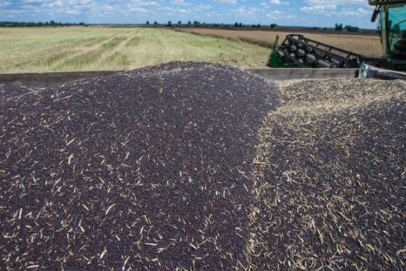 Урожайність ріпаку в Україні найнижча за останні дев'ять років фото, ілюстрація