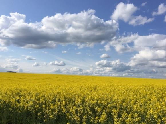 Изменения климата: ученые обнаружили неожиданный плюс глобального потепления для фермеров фото, иллюстрация