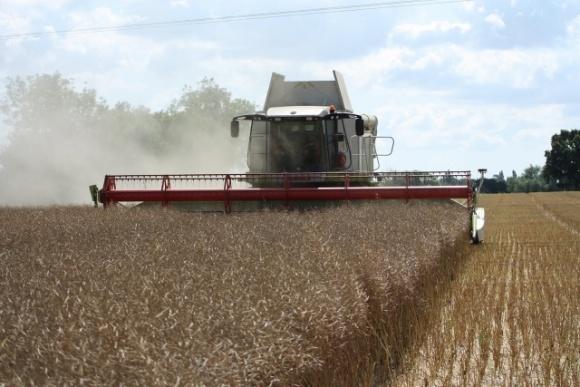 Канада собрала самый низкий за 5 лет урожай рапса фото, иллюстрация
