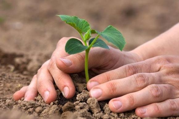 Виробництво сільгосппродукції скоротилося на 2,3% фото, ілюстрація