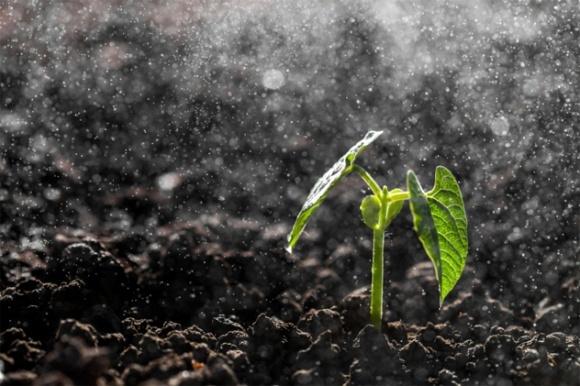 Агролайфхак: на что влияет на доступность элементов питания из почвы? фото, иллюстрация